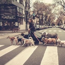 Dogs in Buenos Aires – No. 05